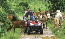 Discover Phuket or Phang Nga by ATV with our four programs.