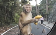 You might see monkeys in the mangroves or on the road near the pier, or they might come out to say hello.