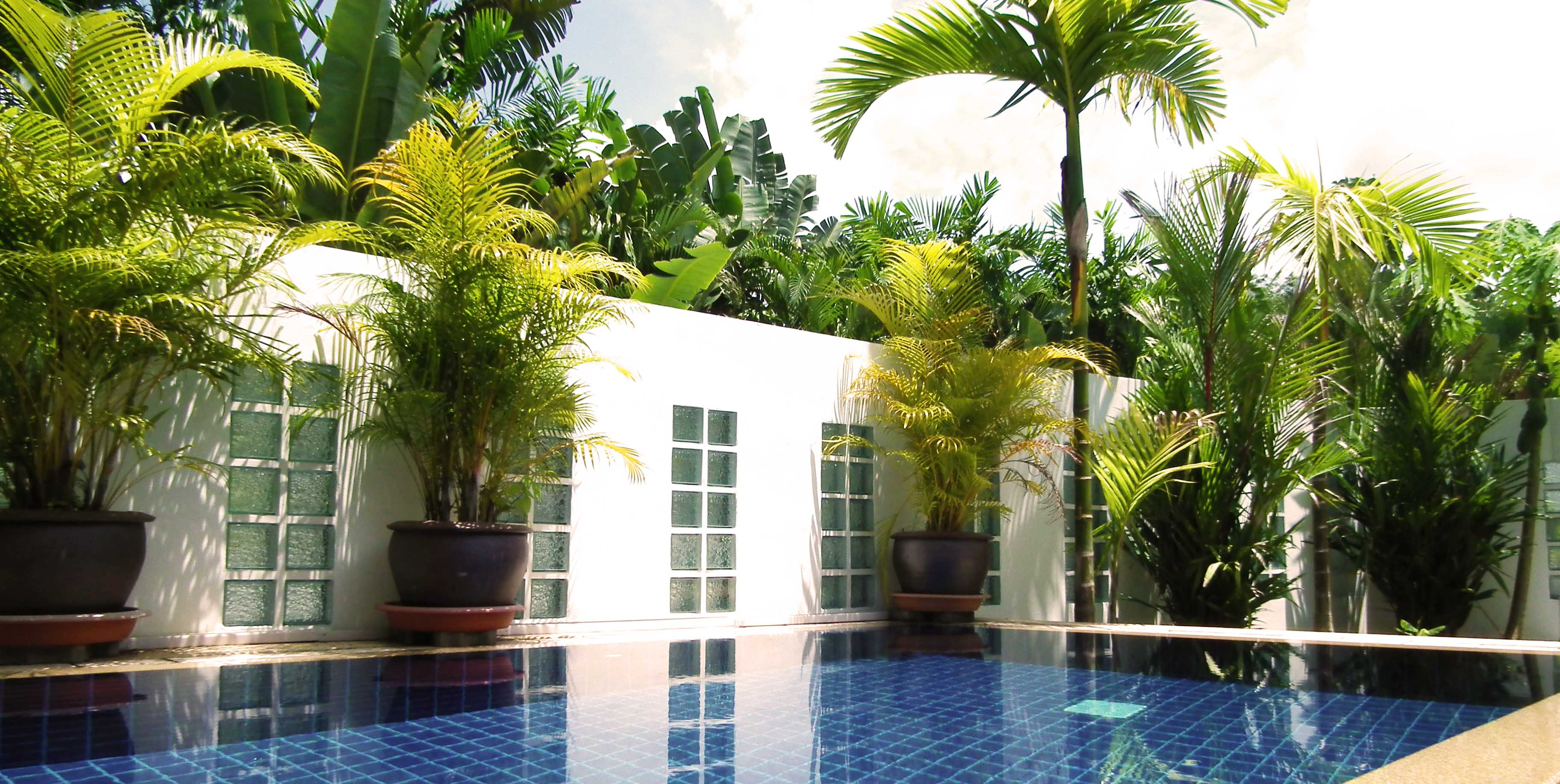 Delta properties villa 4 coconut for Piscine jardin tropical